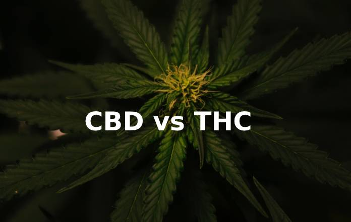 CBD v THC - What's the Difference?