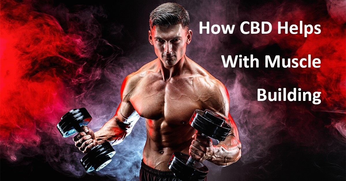 How CBD Helps With Muscle Building